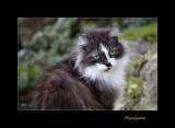Nature animal chat menton IMG_9958.jpg