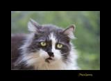Nature animal menton chat IMG_0076.jpg
