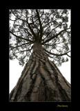 Nature arbre jardin menton IMG_0048.jpg