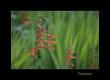 Nature fleur Menton IMG_0028.jpg