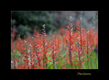 Nature fleur Menton IMG_0030.jpg
