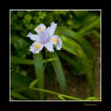 Nature fleur Menton IMG_9956.jpg