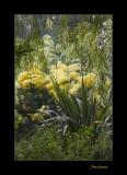 Nature fleur jardin menton IMG_0084.jpg