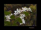 Nature fleur jardin menton IMG_0088.jpg