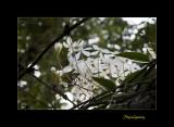 Nature fleur menton IMG_0090.jpg
