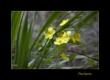Nature fleur menton IMG_9982.jpg
