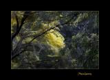 Nature fleur menton IMG_9986.jpg