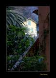 Nature jardin menton IMG_0104.jpg