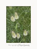 Nature fleur Le�rins IMG_6285.jpg