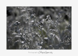 Nature plante IMG_6186.jpg