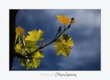 Nature plante MC IMG_6196.jpg
