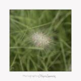nature plante IMG_7345.jpg