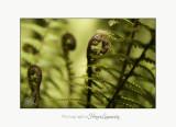 Naature plante jardin POT IMG_6115.jpg