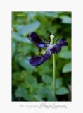 Nature fleur Jardin Pot IMG_6064.jpg