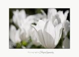 Nature fleur jardin Pot IMG_6029.jpg