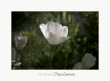Nature fleur jardin Pot IMG_6037.jpg