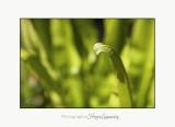 Nature plante jardin Pot IMG_6104.jpg