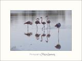 Nature Camargue Oiseaux Flamants IMG_6671.jpg