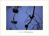 Nature Camargue arbre IMG_6532.jpg