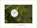Nature Camargue fleur animal IMG_7009.jpg