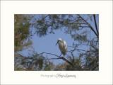 Nature Camargue oiseaux IMG_6445.jpg