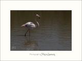 Nature Camargue oiseaux IMG_6489.jpg
