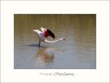 Nature Camargue oiseaux IMG_6490.jpg