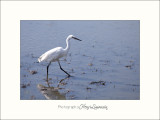 Nature Camargue oiseaux IMG_6634.jpg