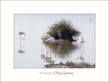 Nature Camargue oiseaux IMG_6666.jpg