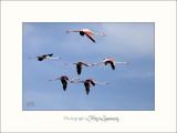 Nature Camargue oiseaux IMG_6681.jpg
