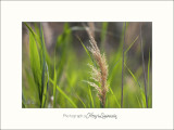 Nature camargue IMG_6657.jpg