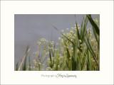 Nature camargue paysage IMG_6625.jpg