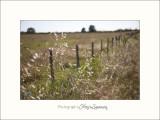 Nature paysage Camargue IMG_6377.jpg