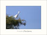 Nature Camargue oiseaux IMG_6696.jpg