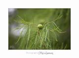 Nature Plante IMG_7935.jpg