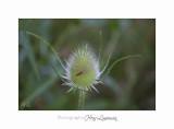 Nature animal IMG_7878.jpg