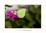 Nature animal papillon IMG_7796.jpg