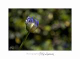 Nature fleur IMG_7790.jpg