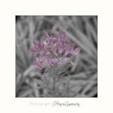 Nature fleurs IMG_7342.jpg