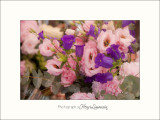 Nature fleurs MG_7365.jpg