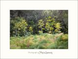 Nature paysage lerins IMG_6332.jpg