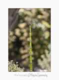 Nature plante jardin pot IMG_6074.jpg