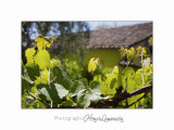 Nature plante jardin pot IMG_6081.jpg