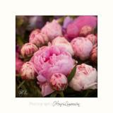 Nice fleur IMG_7366.jpg