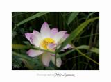 Nature Fontmerle 2014 Fleur IMG_7934.jpg