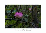 Nature Fontmerle 2014 Fleur IMG_7938.jpg