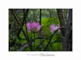 Nature Fontmerle 2014 Fleur IMG_7939.jpg