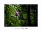 Nature Fontmerle 2014 Fleur IMG_7941.jpg