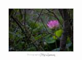 Nature Fontmerle 2014 Fleur IMG_7943.jpg