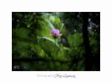 Nature Fontmerle 2014 Fleur IMG_7944.jpg